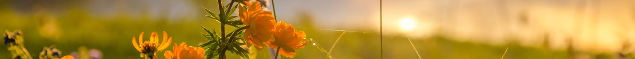 wildflower header